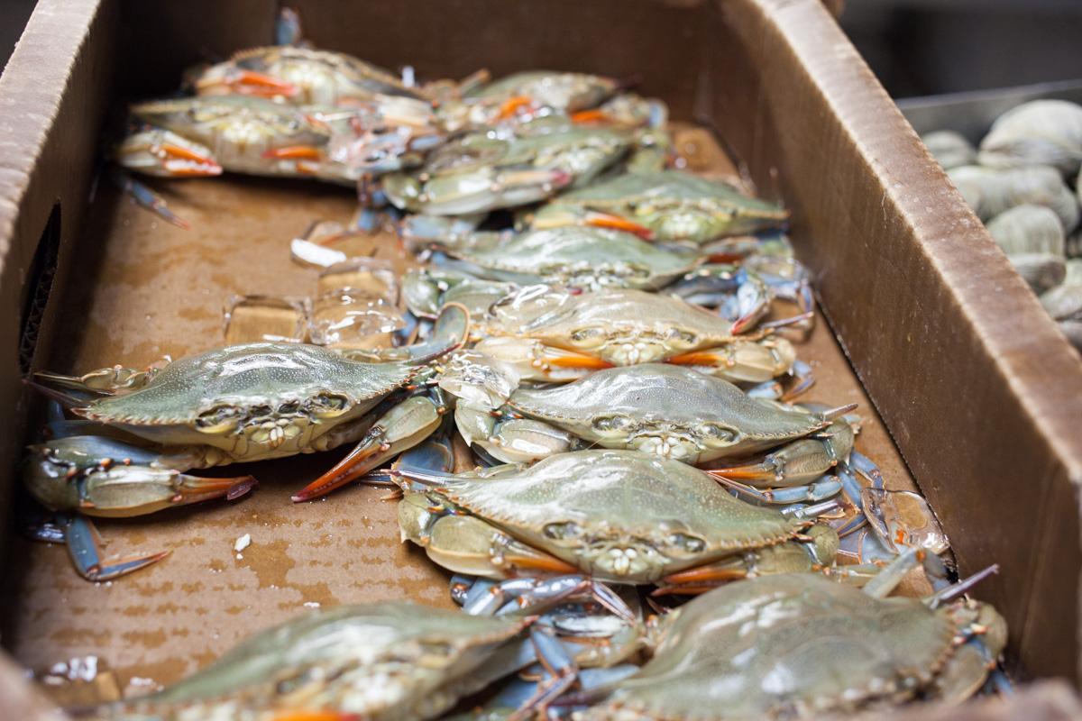 astoria-seafood-robertiaga-12