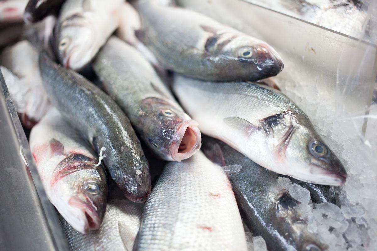 astoria-seafood-robertiaga-3