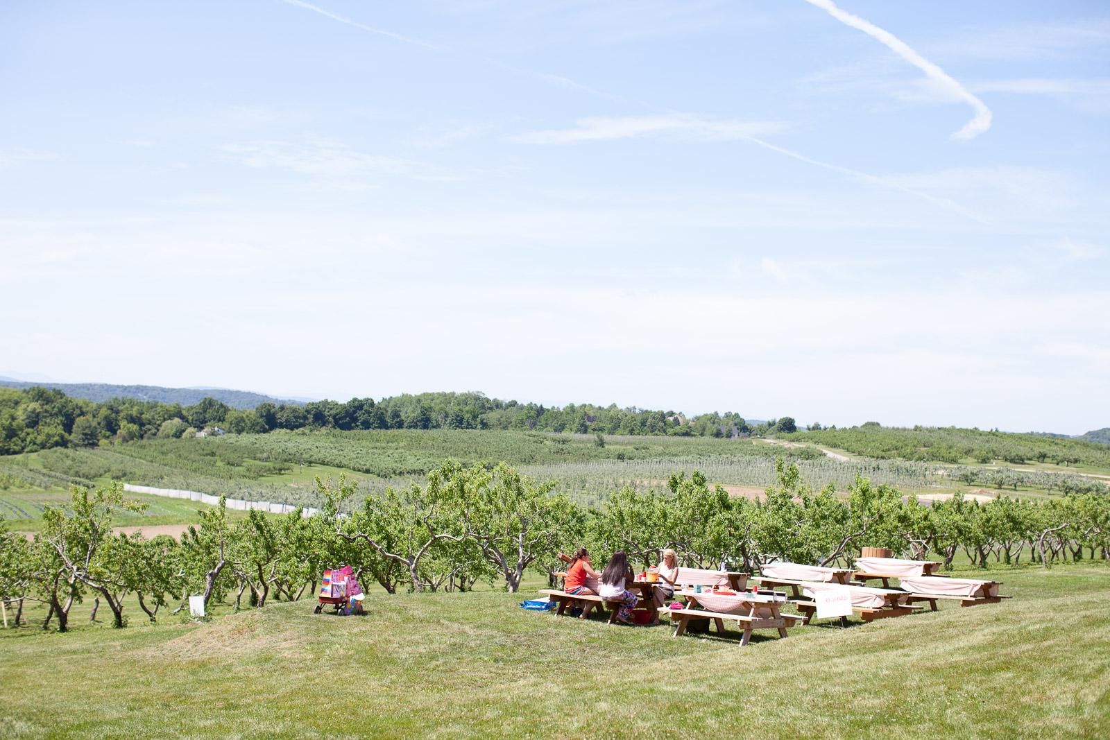 freshkill-farm-zbior-truskawek-w-usa-robertiaga-1