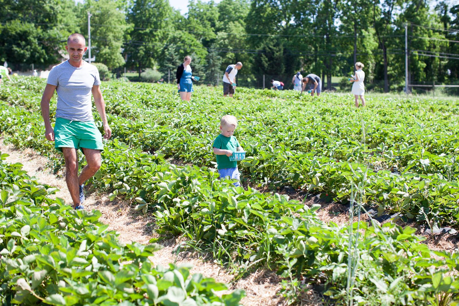 freshkill-farm-zbior-truskawek-w-usa-robertiaga-4