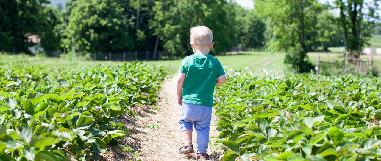 freshkill-farm-zbior-truskawek-w-usa-robertiaga-5