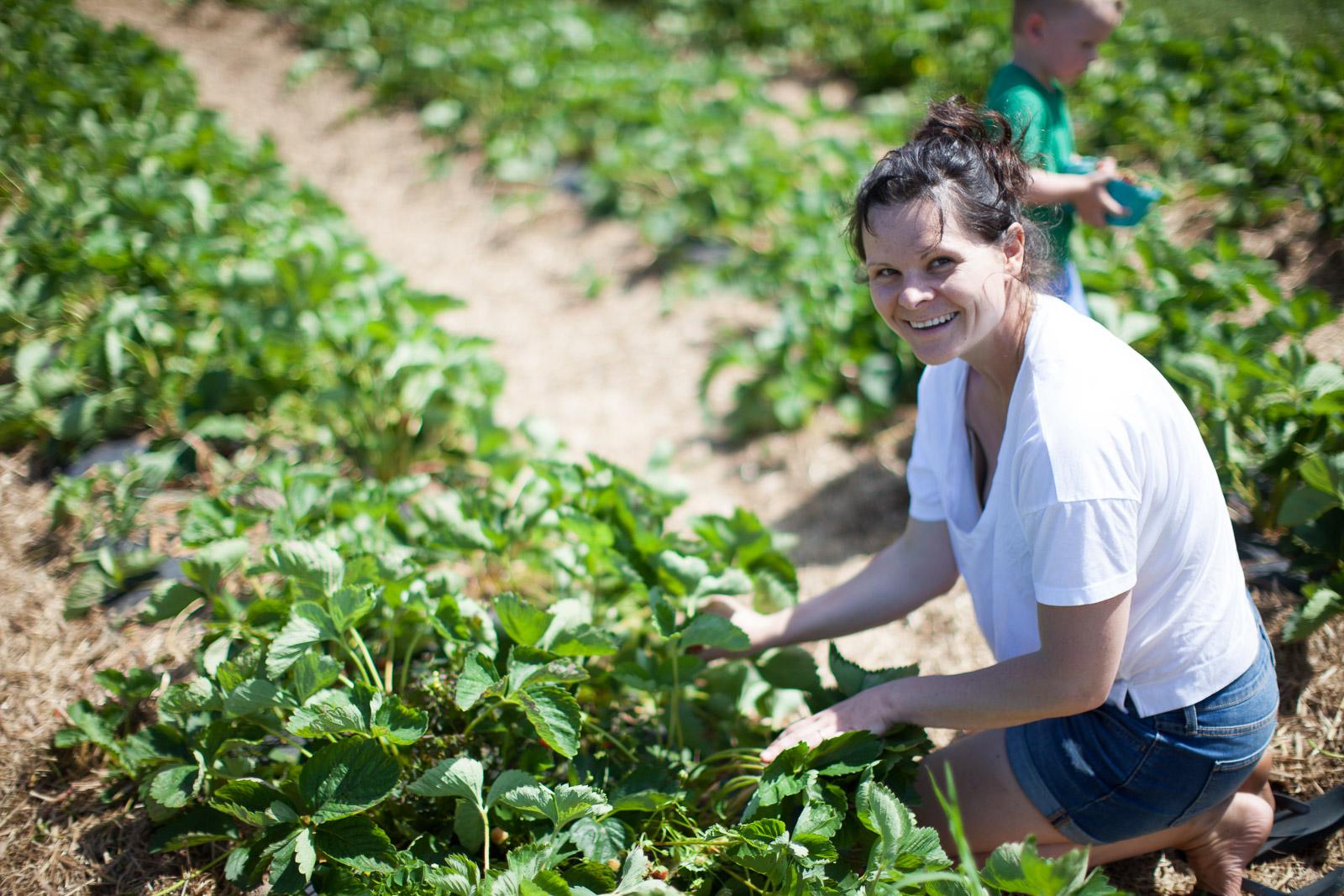 freshkill-farm-zbior-truskawek-w-usa-robertiaga-6