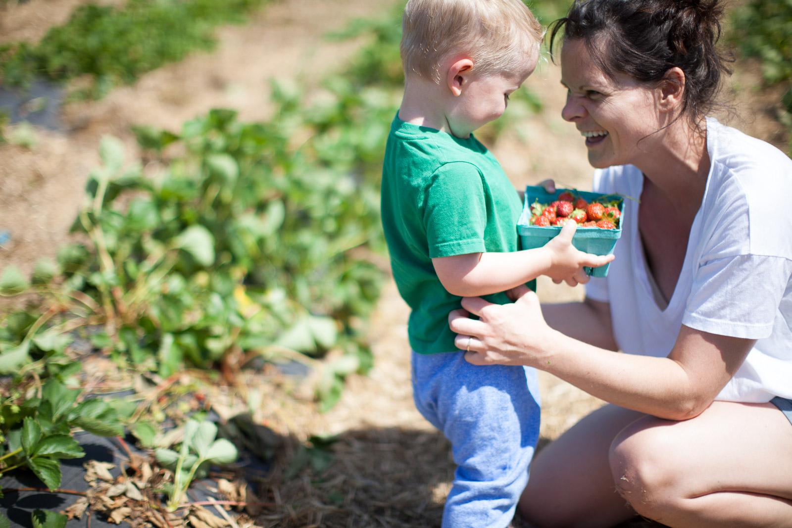 freshkill-farm-zbior-truskawek-w-usa-robertiaga-7