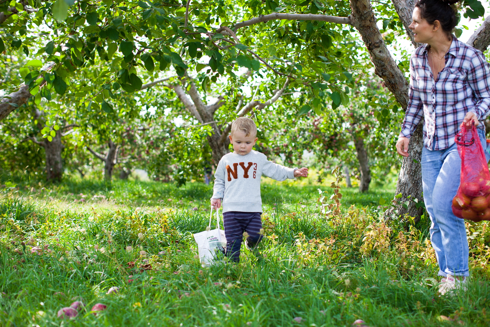 apple-picking-11