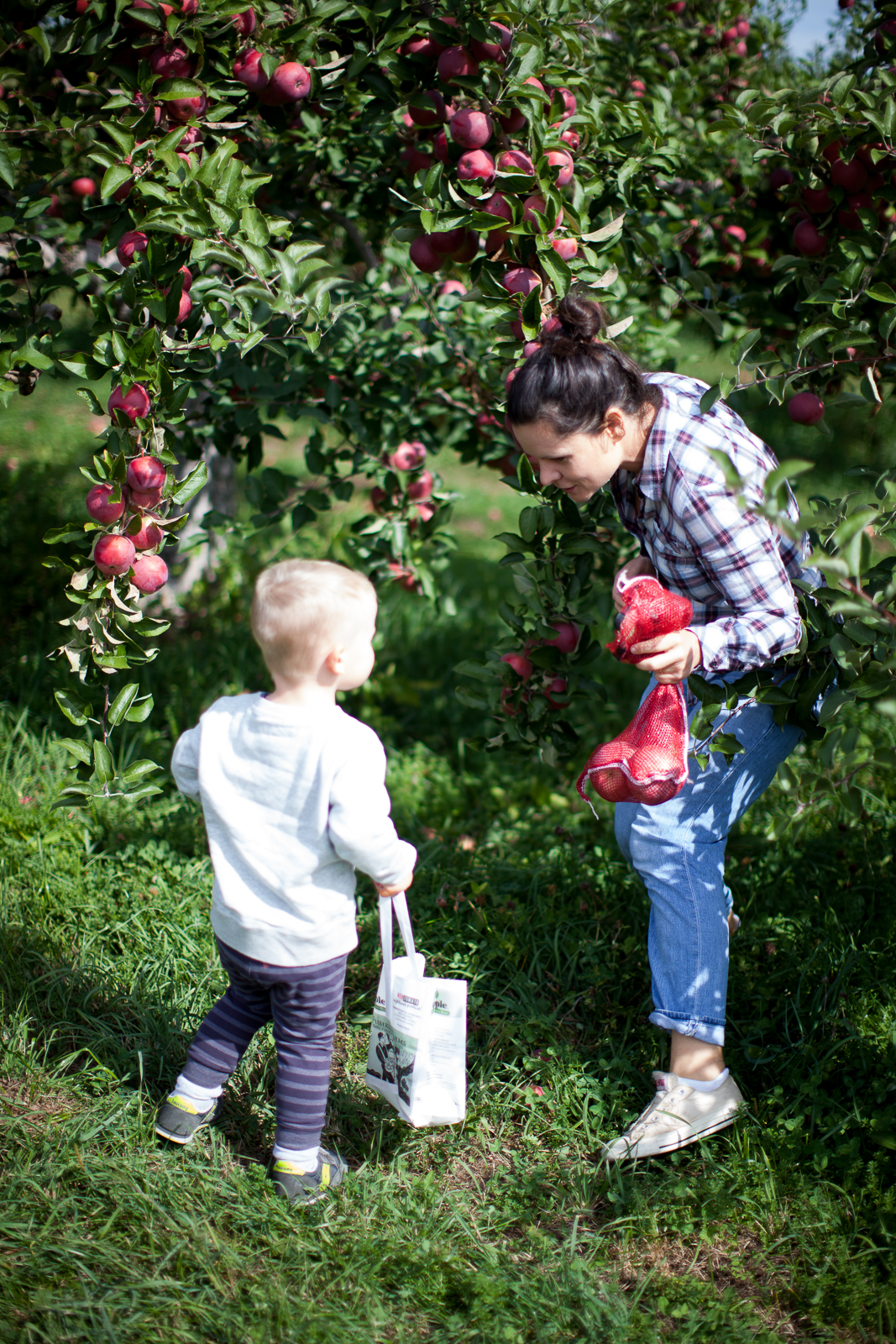apple-picking-4
