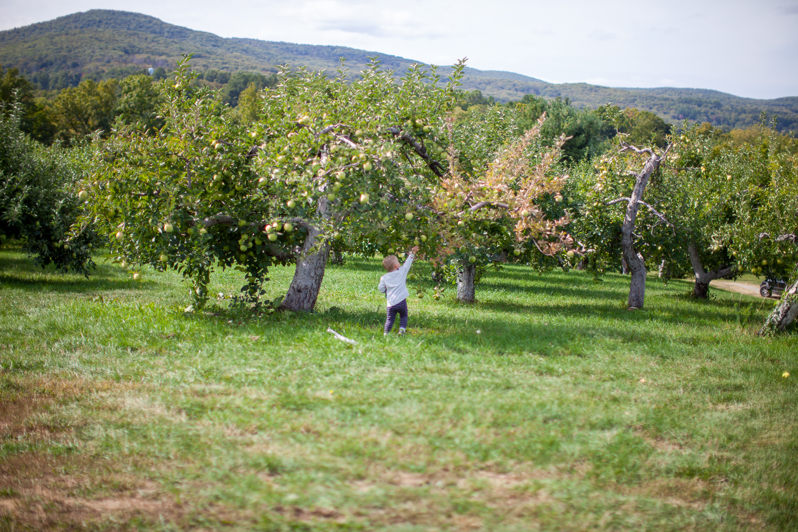 apple-picking-5