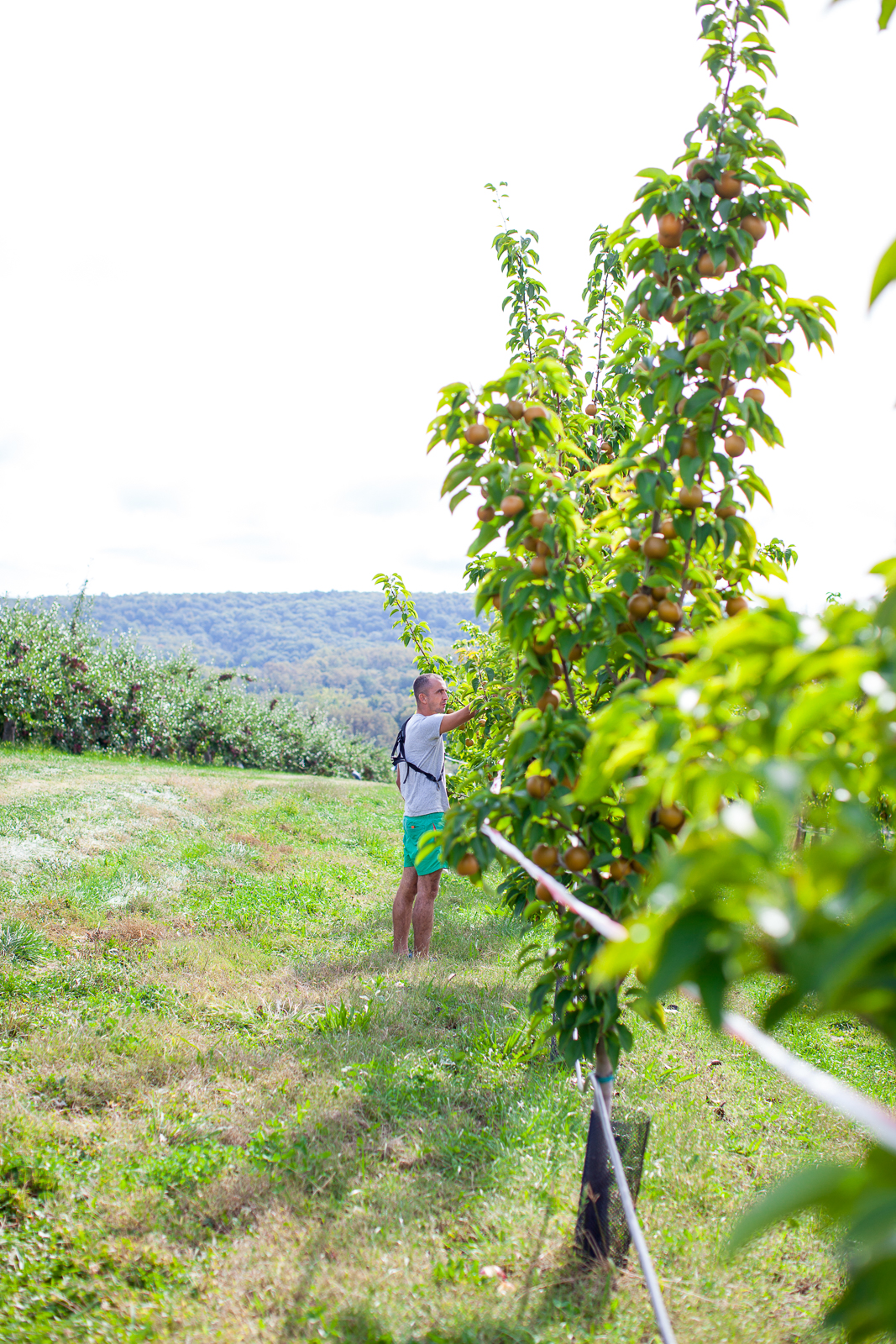 apple-picking-7