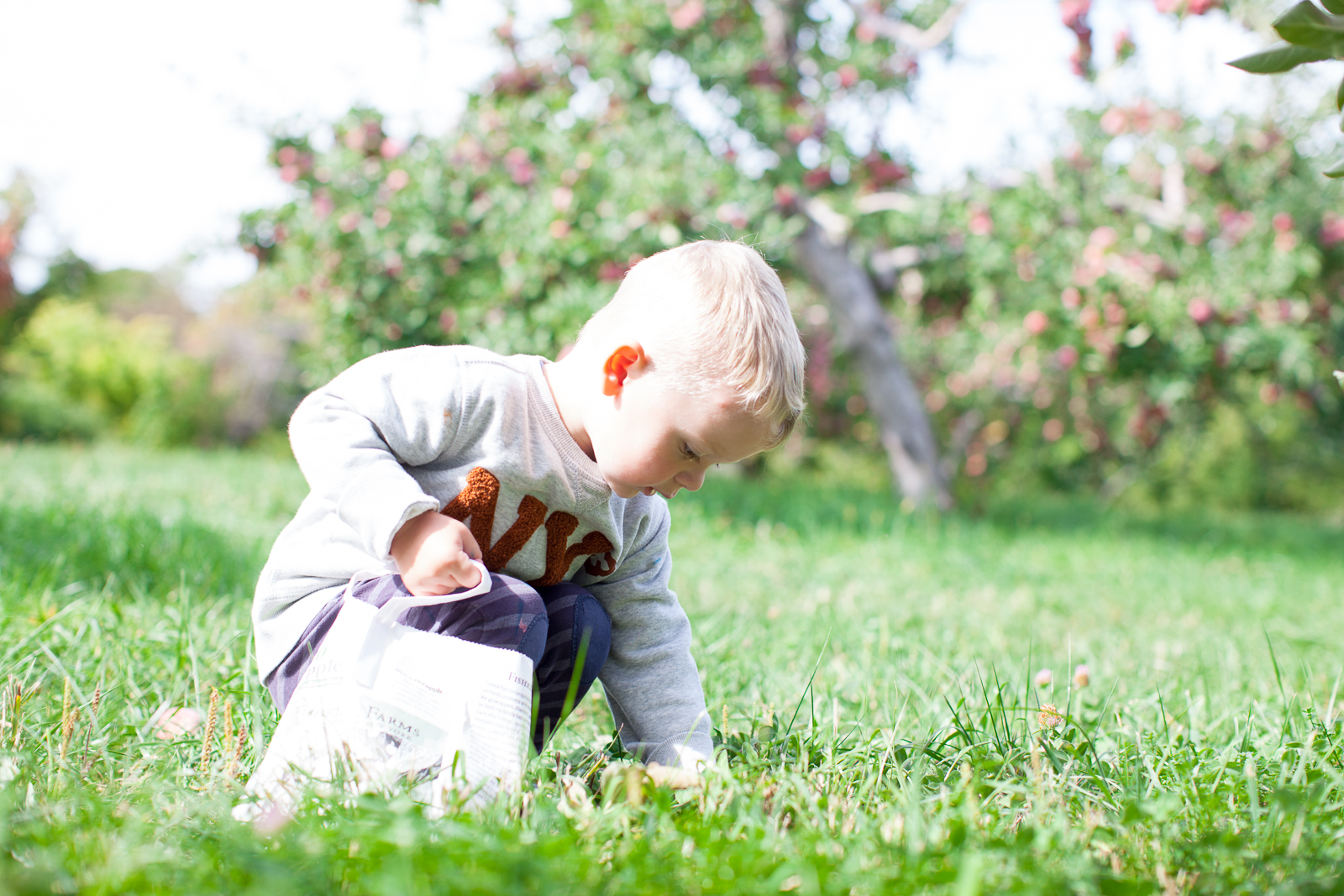 apple-picking-9
