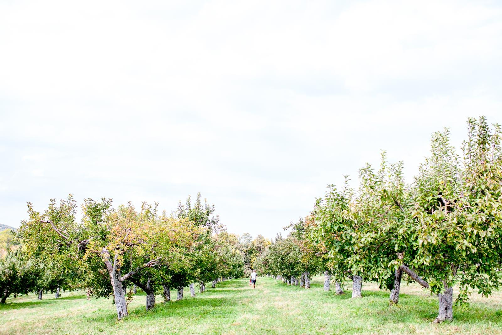fishkill-farm-applepiking-2016-robertiaga-3